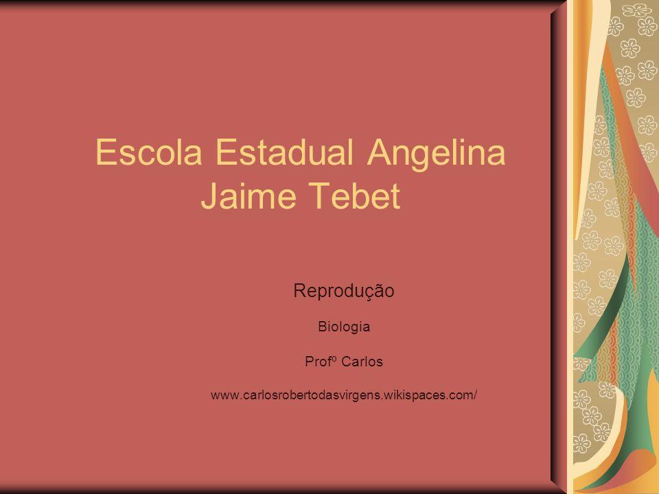 Escola Estadual Angelina Jaime Tebet Reprodução Biologia Profº Carlos www.carlosrobertodasvirgens.wikispaces.com/