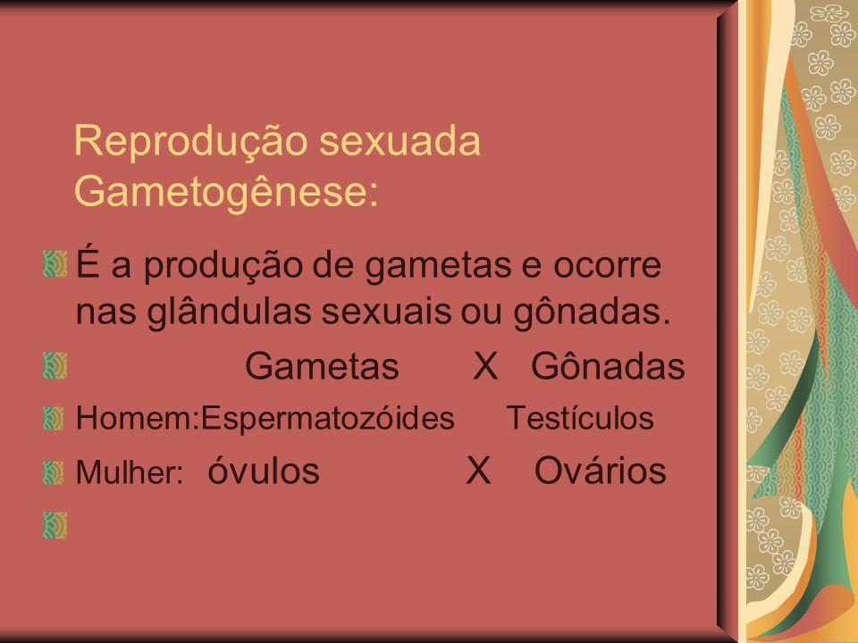 Reprodução sexuada Gametogênese: É a produção de gametas e ocorre nas glândulas sexuais ou gônadas. Gametas X Gônadas Homem:Espermatozóides Testículos