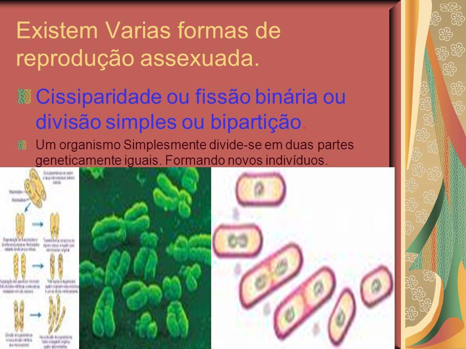 Existem Varias formas de reprodução assexuada. Cissiparidade ou fissão binária ou divisão simples ou bipartição. Um organismo Simplesmente divide-se e