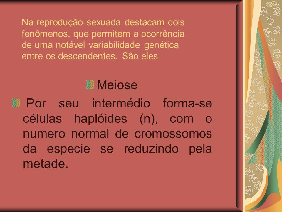 Na reprodução sexuada destacam dois fenômenos, que permitem a ocorrência de uma notável variabilidade genética entre os descendentes. São eles Meiose