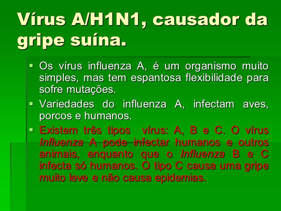 Vírus A/H1N1, causador da gripe suína. Os vírus influenza A, é um organismo muito simples, mas tem espantosa flexibilidade para sofre mutações. Os vír