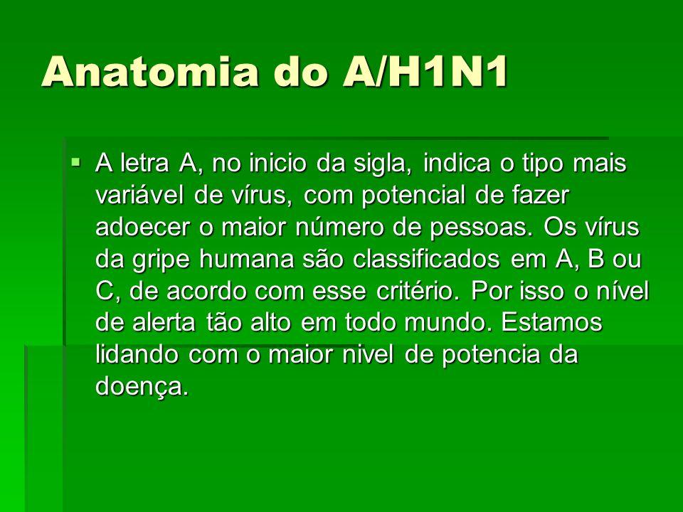 Anatomia do A/H1N1 A letra A, no inicio da sigla, indica o tipo mais variável de vírus, com potencial de fazer adoecer o maior número de pessoas. Os v