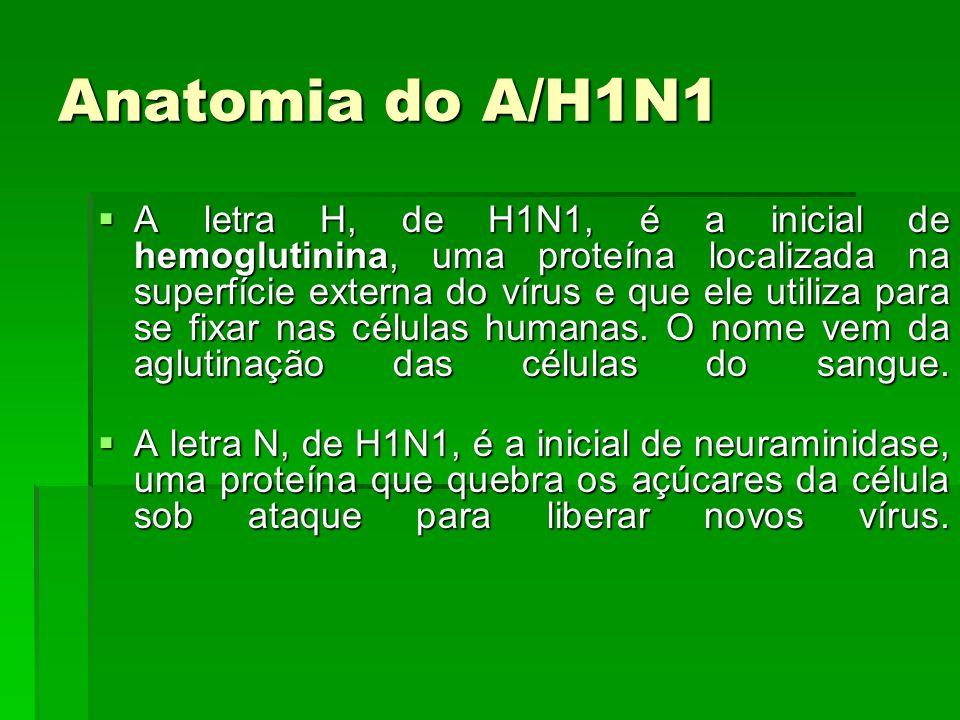 Anatomia do A/H1N1 A letra H, de H1N1, é a inicial de hemoglutinina, uma proteína localizada na superfície externa do vírus e que ele utiliza para se