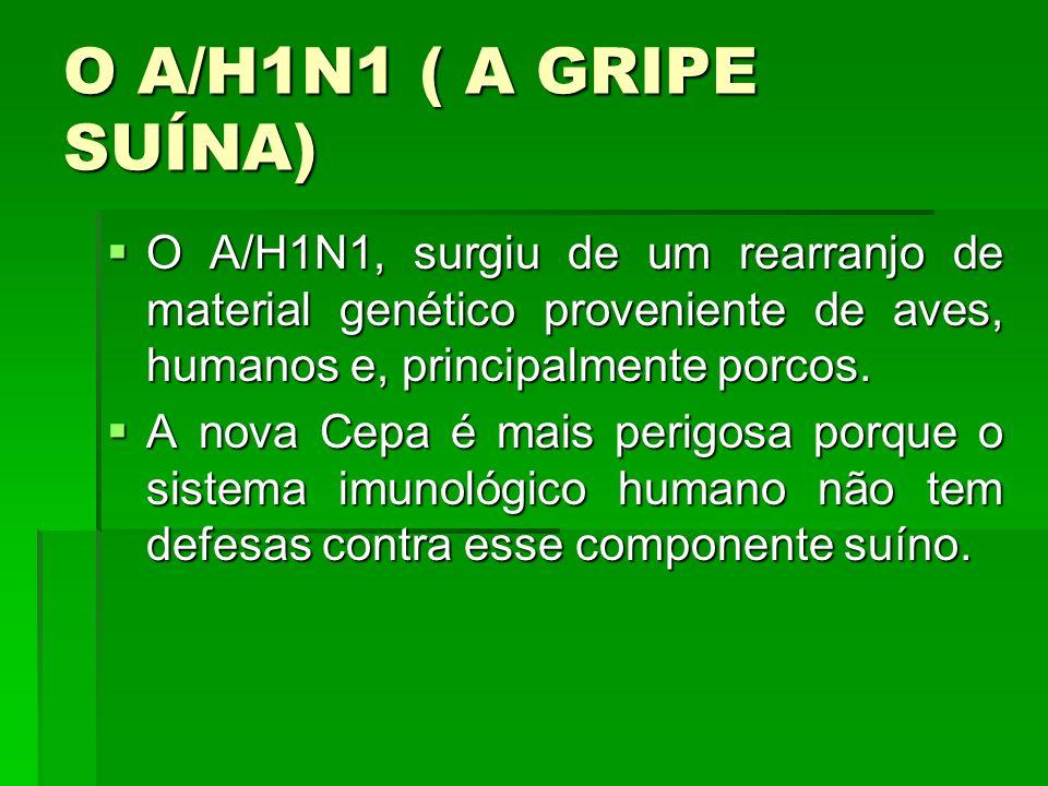 O A/H1N1 ( A GRIPE SUÍNA) O A/H1N1, surgiu de um rearranjo de material genético proveniente de aves, humanos e, principalmente porcos. O A/H1N1, surgi