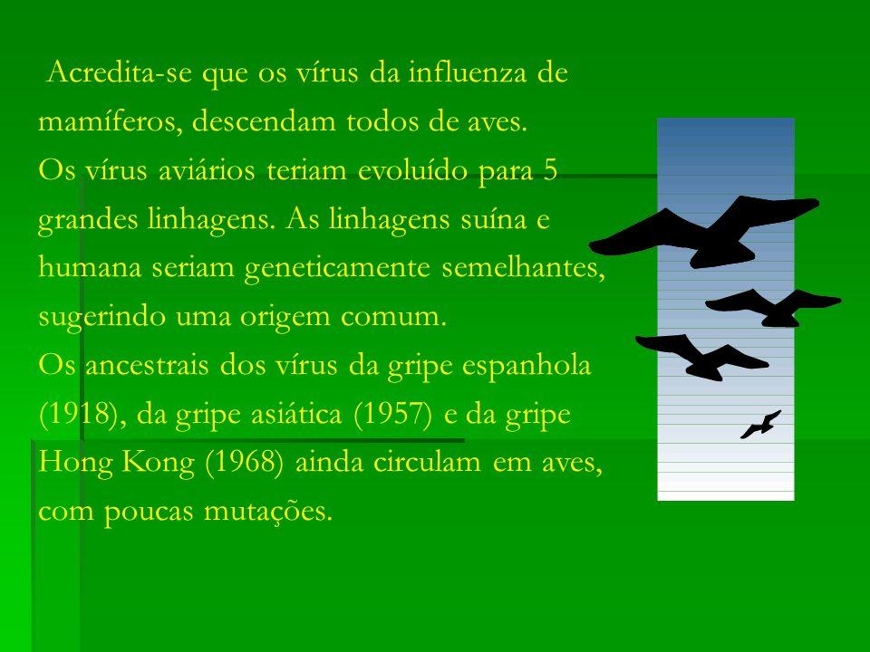 Acredita-se que os vírus da influenza de mamíferos, descendam todos de aves. Os vírus aviários teriam evoluído para 5 grandes linhagens. As linhagens
