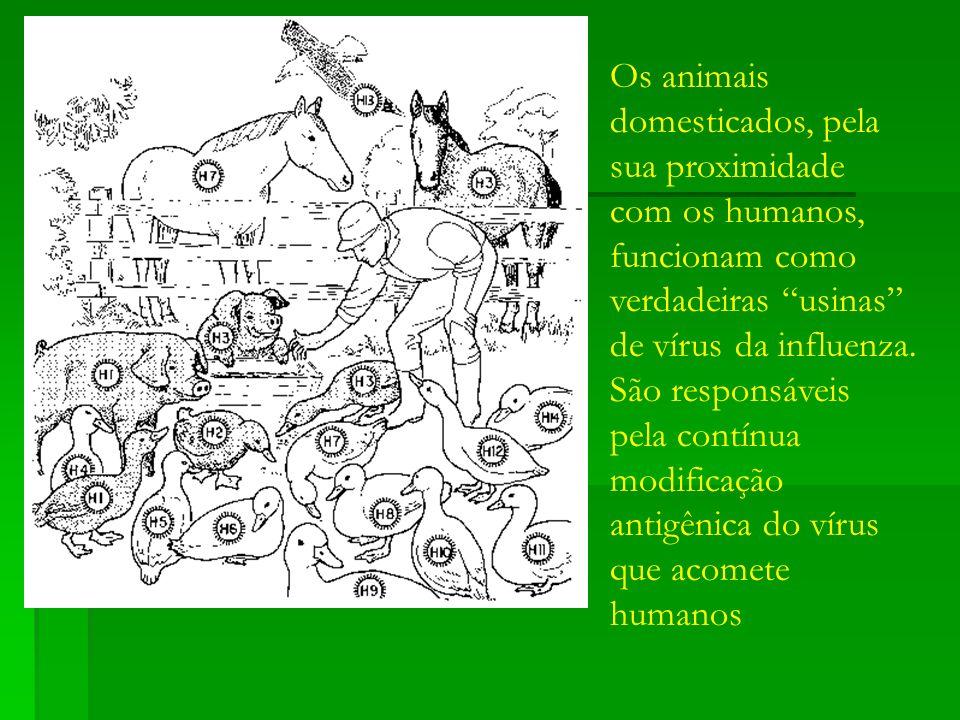 Os animais domesticados, pela sua proximidade com os humanos, funcionam como verdadeiras usinas de vírus da influenza. São responsáveis pela contínua