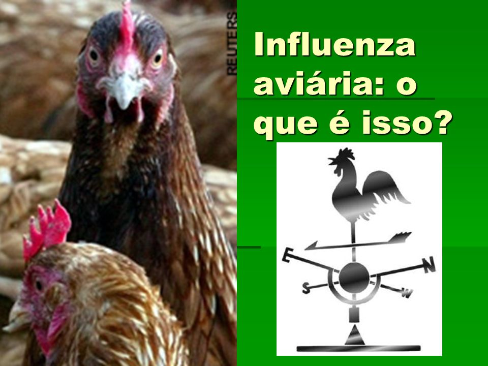 A influenza aviária foi identificada em 1878 na Itália.