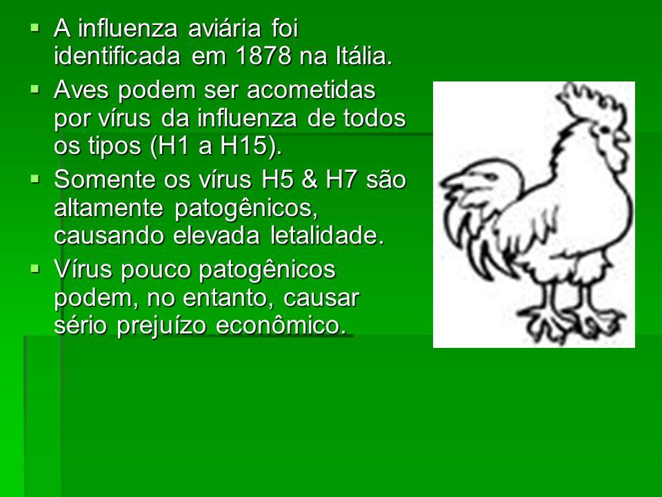 A influenza aviária foi identificada em 1878 na Itália. A influenza aviária foi identificada em 1878 na Itália. Aves podem ser acometidas por vírus da