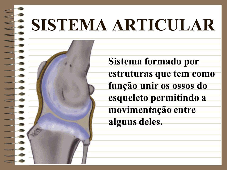 SISTEMA ARTICULAR Sistema formado por estruturas que tem como função unir os ossos do esqueleto permitindo a movimentação entre alguns deles.