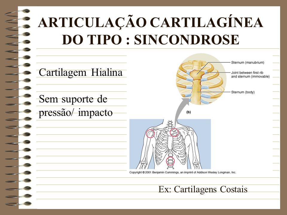 ARTICULAÇÃO CARTILAGÍNEA DO TIPO : SINCONDROSE Cartilagem Hialina Sem suporte de pressão/ impacto Ex: Cartilagens Costais