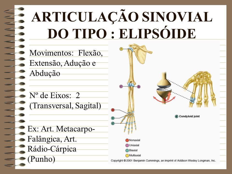 ARTICULAÇÃO SINOVIAL DO TIPO : ELIPSÓIDE Ex: Art. Metacarpo- Falângica, Art. Rádio-Cárpica (Punho) Movimentos: Flexão, Extensão, Adução e Abdução Nº d