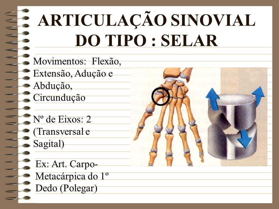 ARTICULAÇÃO SINOVIAL DO TIPO : SELAR Ex: Art. Carpo- Metacárpica do 1º Dedo (Polegar) Movimentos: Flexão, Extensão, Adução e Abdução, Circundução Nº d