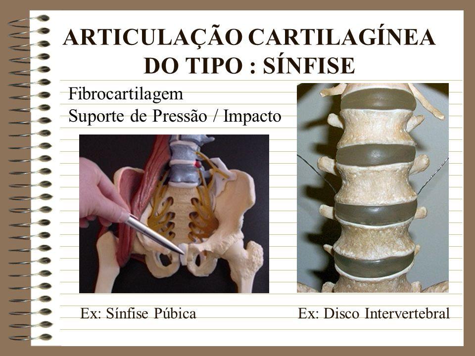 ARTICULAÇÃO CARTILAGÍNEA DO TIPO : SÍNFISE Fibrocartilagem Suporte de Pressão / Impacto Ex: Sínfise PúbicaEx: Disco Intervertebral
