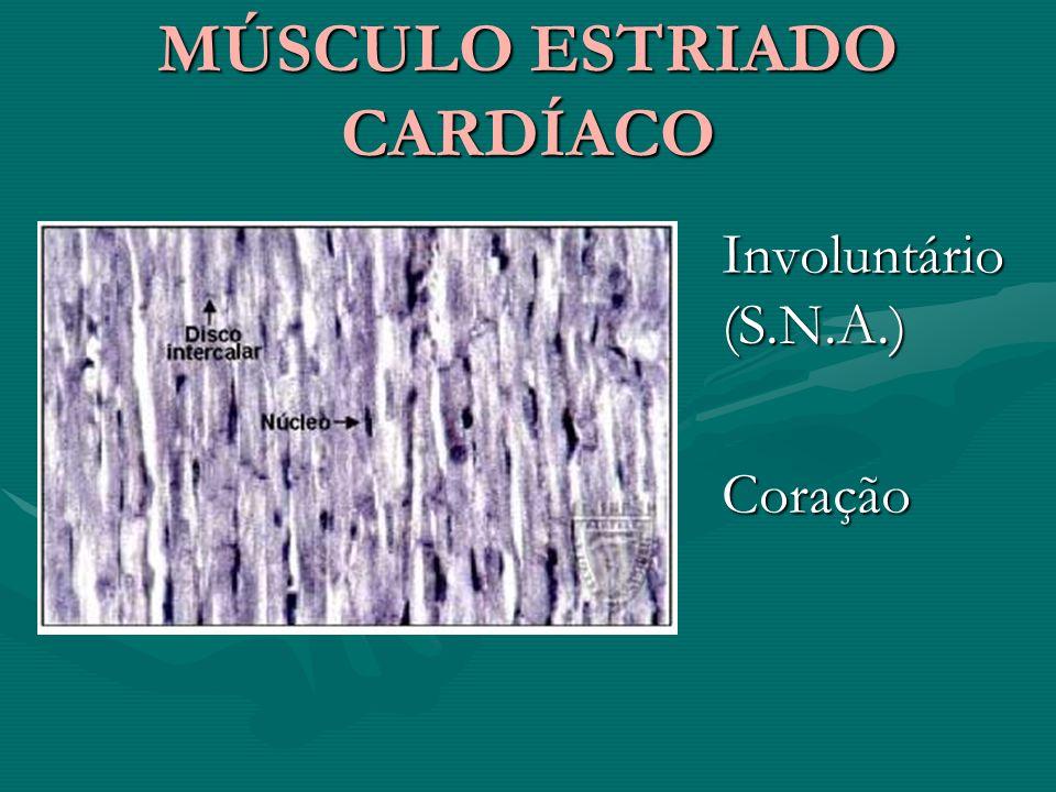 MÚSCULO ESTRIADO CARDÍACO MÚSCULO ESTRIADO CARDÍACO Involuntário (S.N.A.) Coração