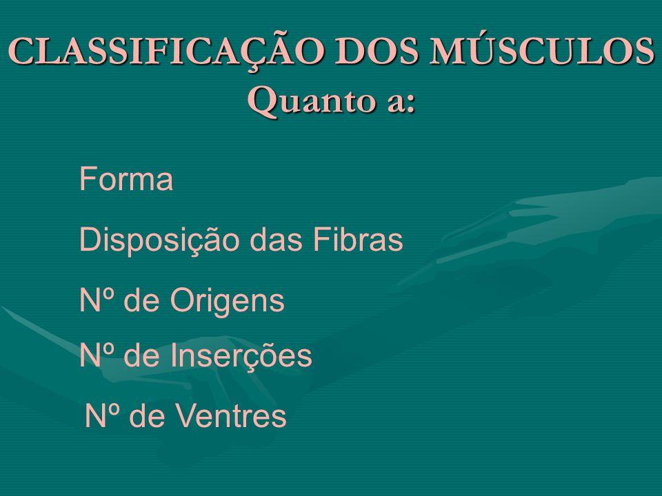 CLASSIFICAÇÃO DOS MÚSCULOS Quanto a: Forma Disposição das Fibras Nº de Origens Nº de Inserções Nº de Ventres