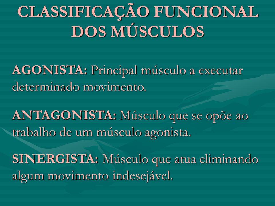 CLASSIFICAÇÃO FUNCIONAL DOS MÚSCULOS AGONISTA: Principal músculo a executar determinado movimento. ANTAGONISTA: Músculo que se opõe ao trabalho de um