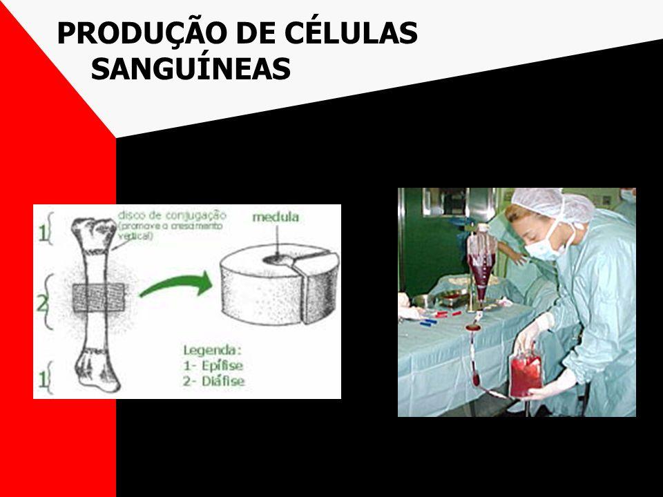 PRODUÇÃO DE CÉLULAS SANGUÍNEAS