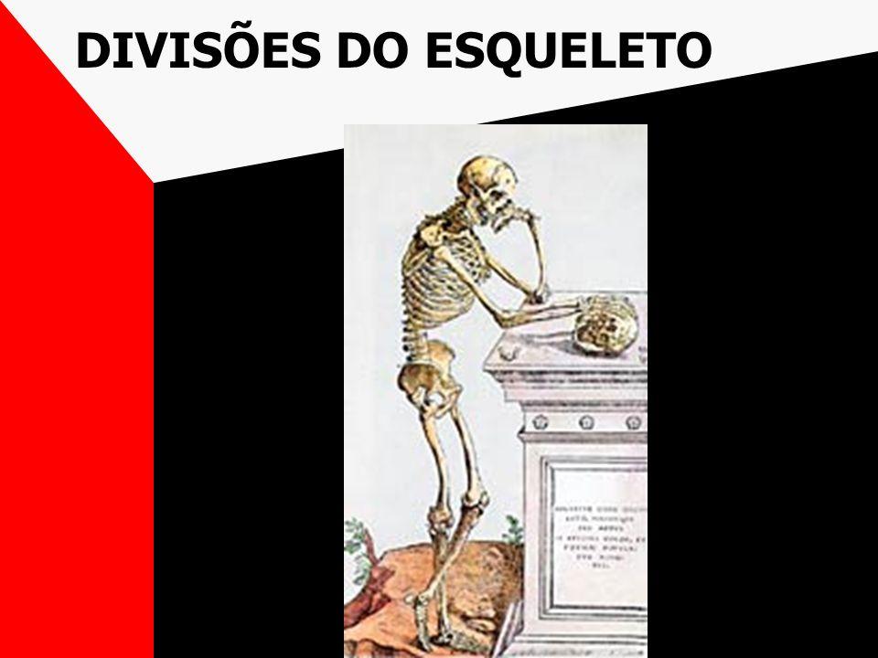 DIVISÕES DO ESQUELETO