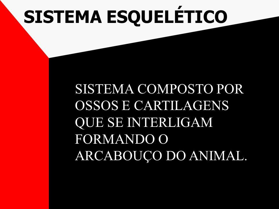 SISTEMA COMPOSTO POR OSSOS E CARTILAGENS QUE SE INTERLIGAM FORMANDO O ARCABOUÇO DO ANIMAL.
