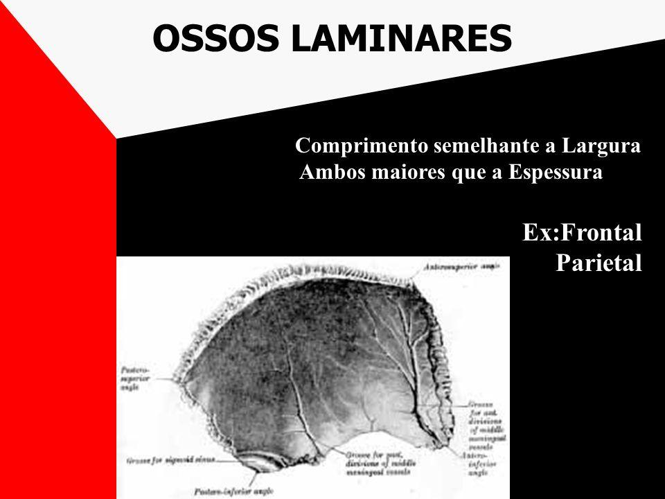 OSSOS LAMINARES Comprimento semelhante a Largura Ambos maiores que a Espessura Ex:Frontal Parietal