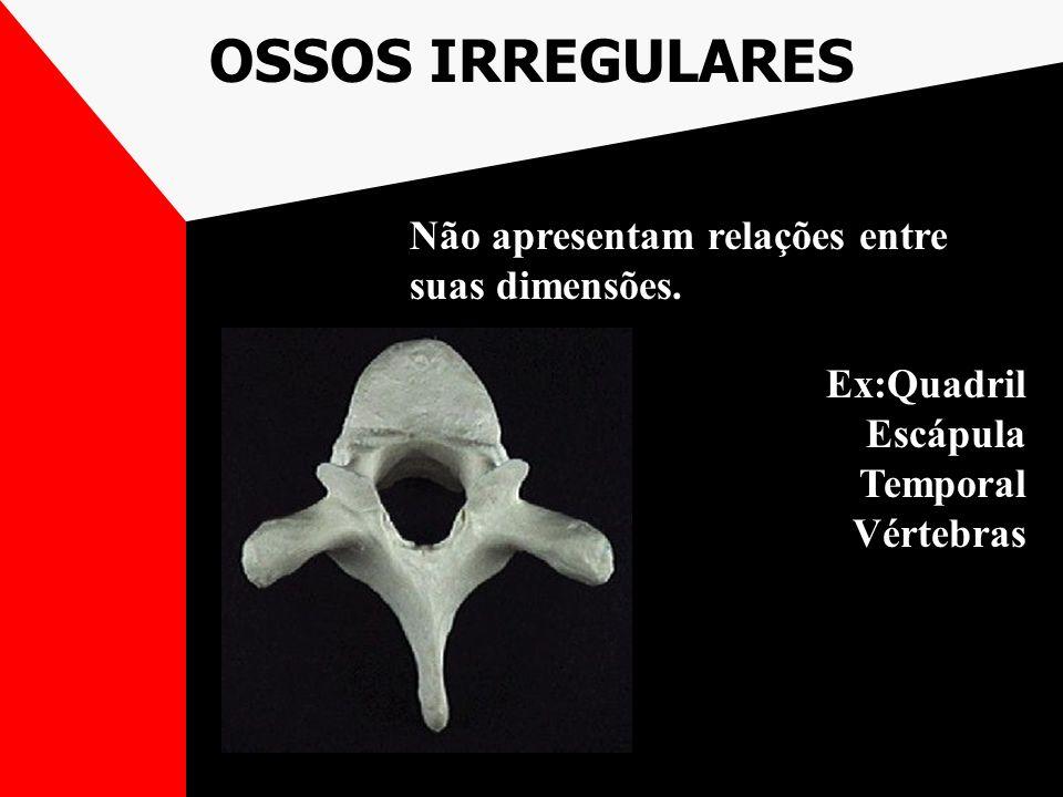 OSSOS IRREGULARES Não apresentam relações entre suas dimensões. Ex:Quadril Escápula Temporal Vértebras