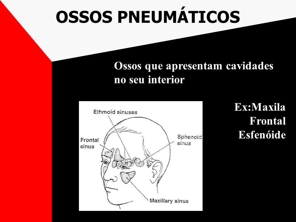 OSSOS PNEUMÁTICOS Ossos que apresentam cavidades no seu interior Ex:Maxila Frontal Esfenóide