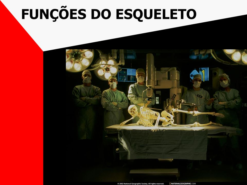 ESTRUTURAS DE UM OSSO LONGO EPÍFISES DIÁFISE