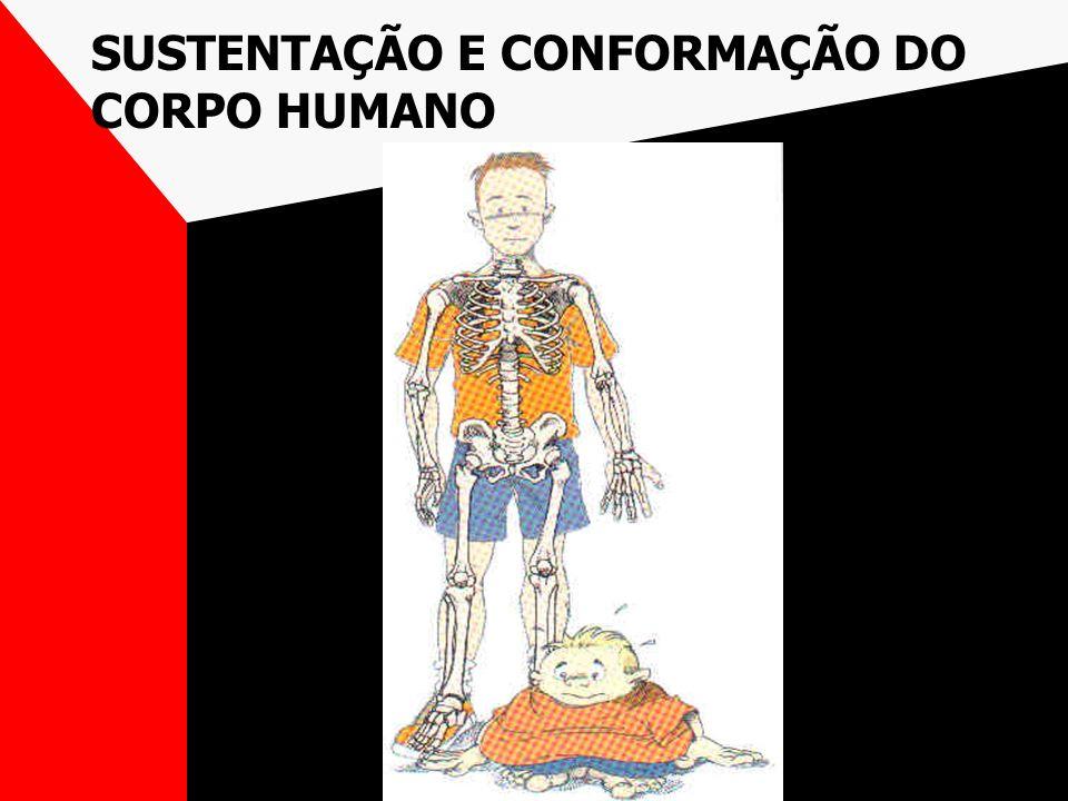 PROTEÇÃO DE ÓRGÃOS VITAIS