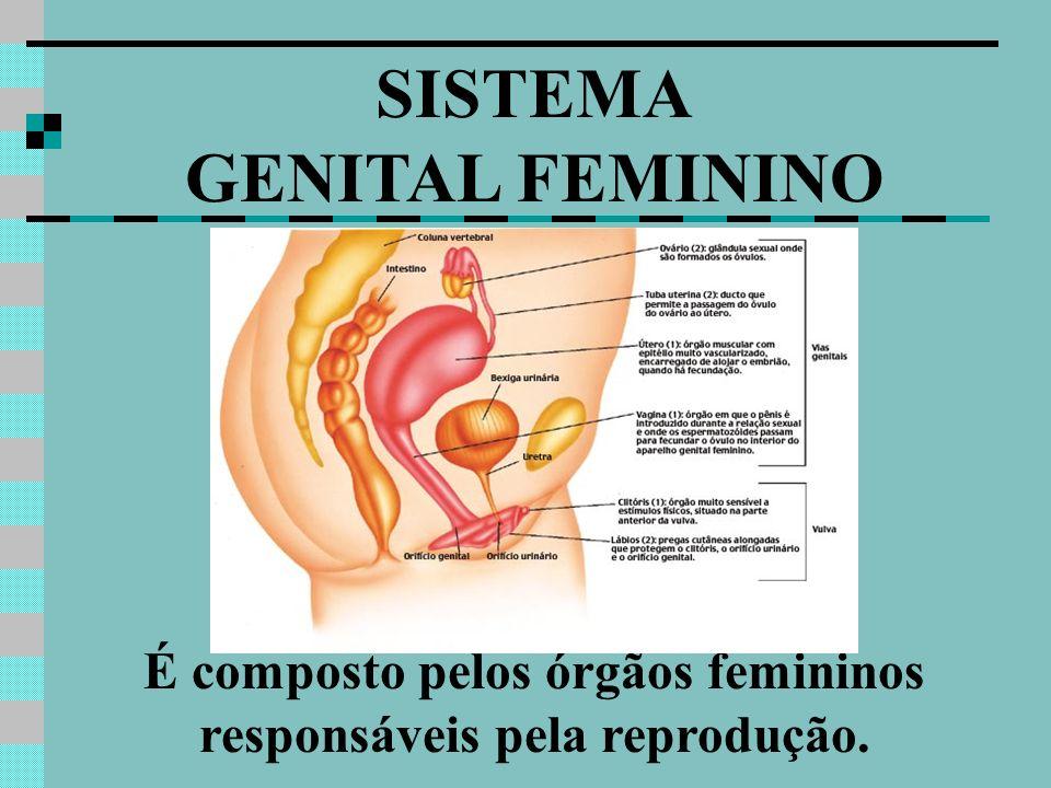 SISTEMA GENITAL FEMININO É composto pelos órgãos femininos responsáveis pela reprodução.