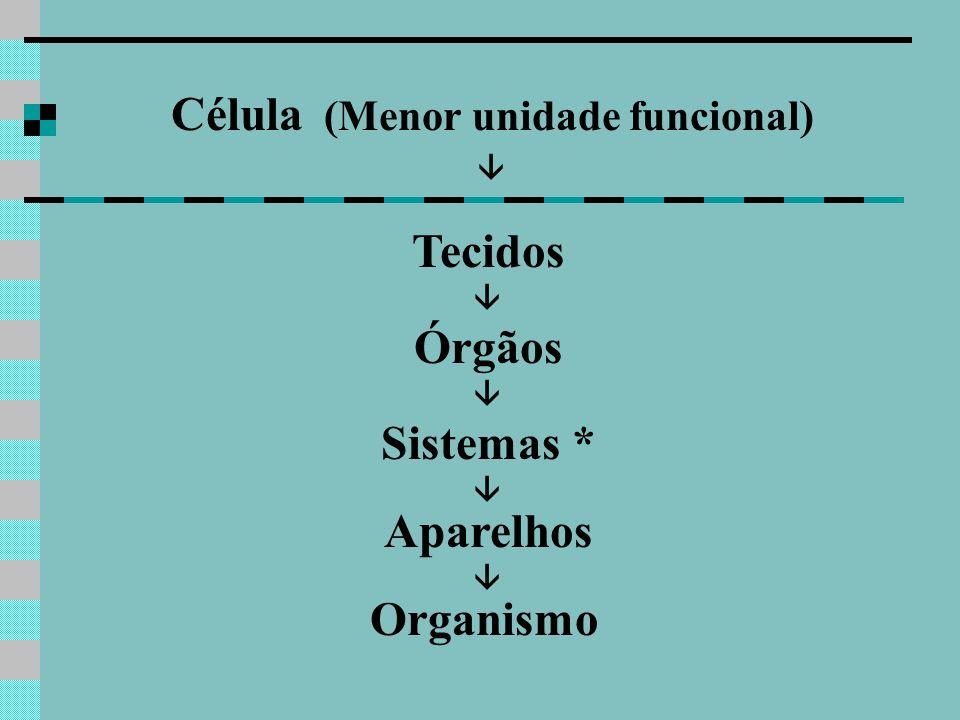 Célula (Menor unidade funcional) Tecidos Órgãos Sistemas * Aparelhos Organismo