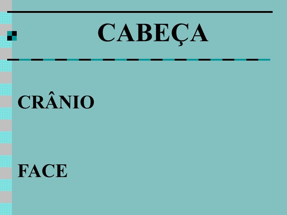 CRÂNIO FACE CABEÇA