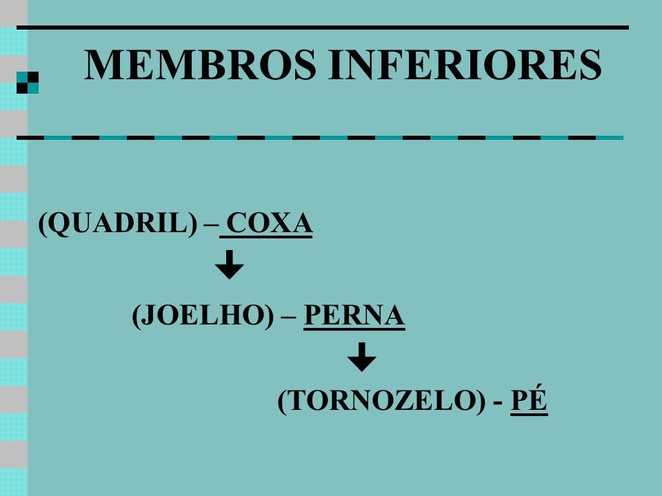 (QUADRIL) – COXA (JOELHO) – PERNA (TORNOZELO) - PÉ MEMBROS INFERIORES