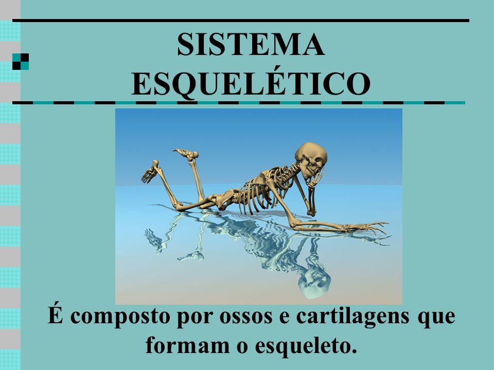 SISTEMA ESQUELÉTICO É composto por ossos e cartilagens que formam o esqueleto.