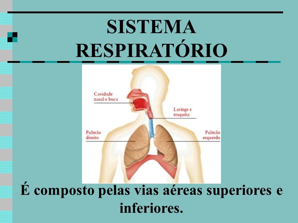 SISTEMA RESPIRATÓRIO É composto pelas vias aéreas superiores e inferiores.