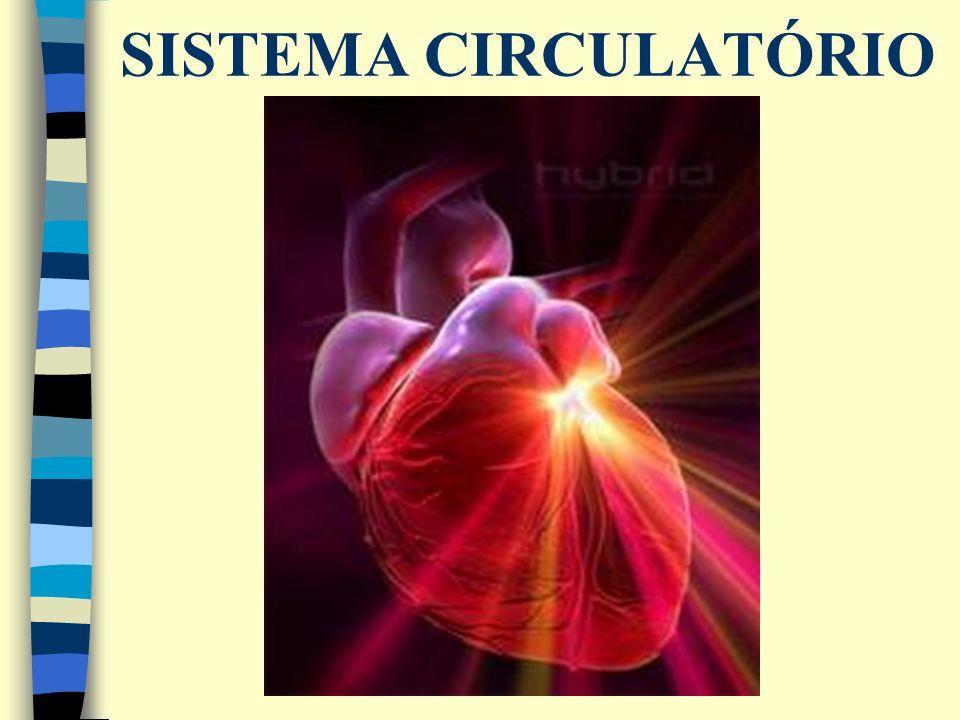 Sistema formado por vasos (artérias, veias, capilares e vasos linfáticos), uma bomba central (Coração) e um componente fluído (sangue).
