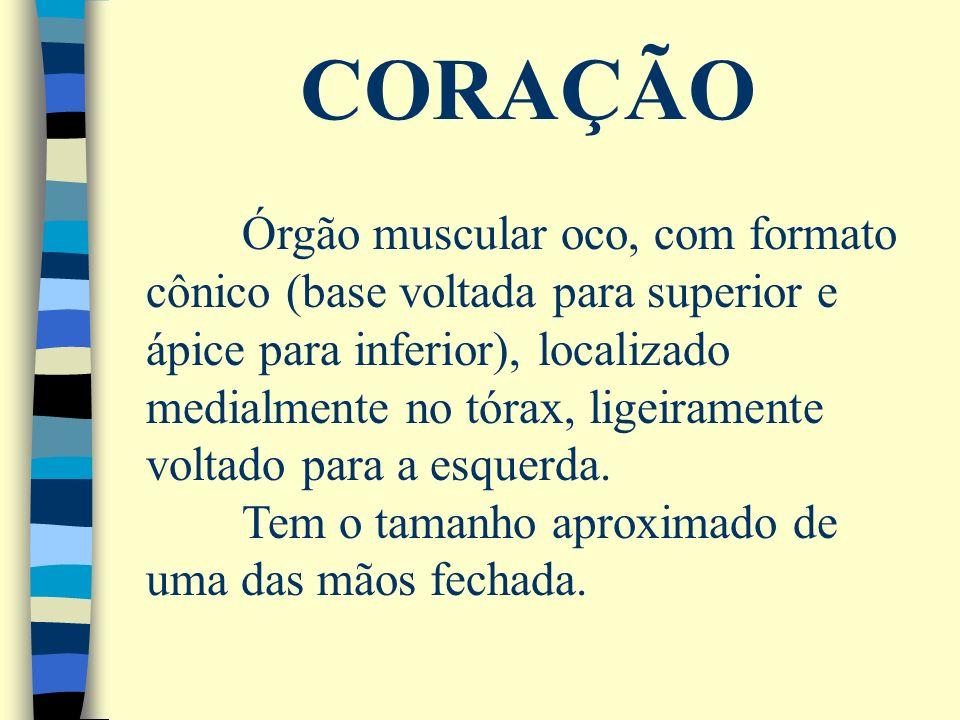 CORAÇÃO Órgão muscular oco, com formato cônico (base voltada para superior e ápice para inferior), localizado medialmente no tórax, ligeiramente volta