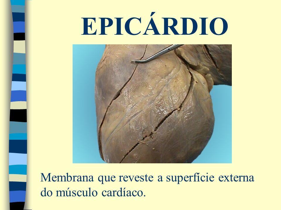 EPICÁRDIO Membrana que reveste a superfície externa do músculo cardíaco.
