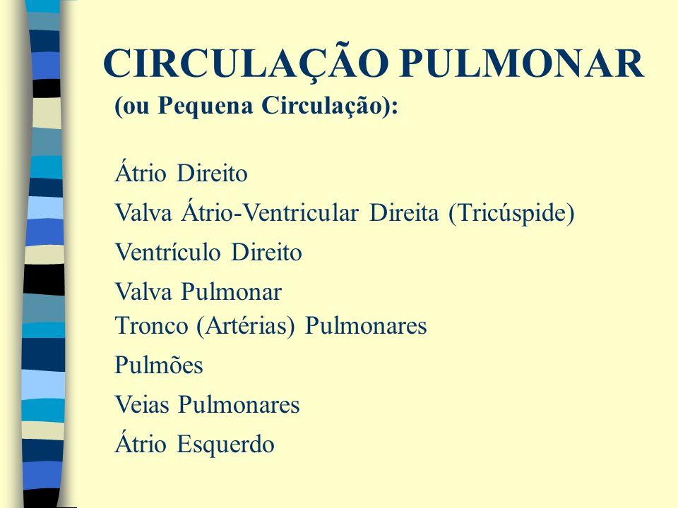 CIRCULAÇÃO PULMONAR Átrio Esquerdo (ou Pequena Circulação): Átrio Direito Valva Átrio-Ventricular Direita (Tricúspide) Ventrículo Direito Valva Pulmon