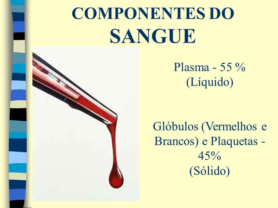 COMPONENTES DO SANGUE Plasma - 55 % (Líquido) Glóbulos (Vermelhos e Brancos) e Plaquetas - 45% (Sólido)