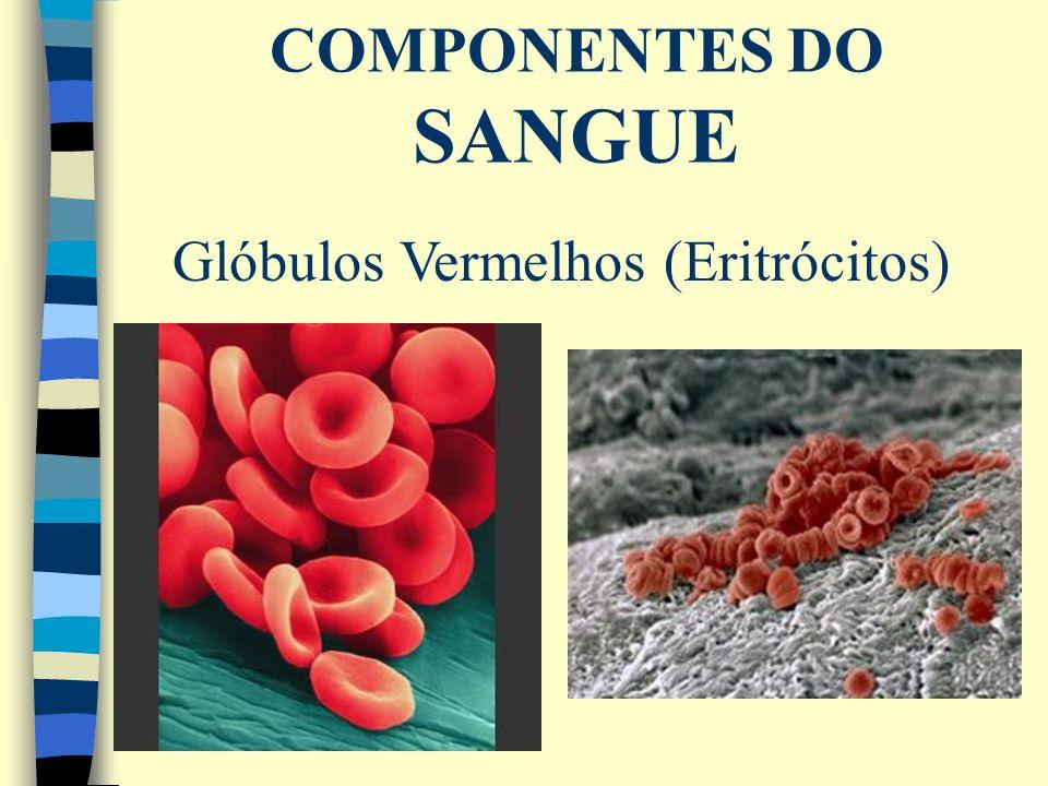 COMPONENTES DO SANGUE Glóbulos Vermelhos (Eritrócitos)