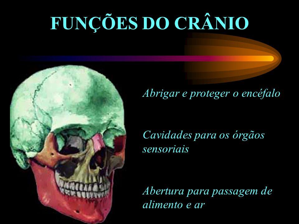 FUNÇÕES DO CRÂNIO Abrigar e proteger o encéfalo Cavidades para os órgãos sensoriais Abertura para passagem de alimento e ar