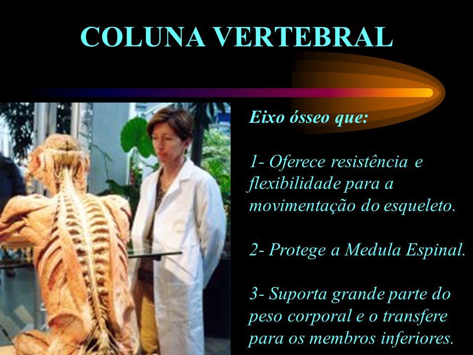 COLUNA VERTEBRAL Eixo ósseo que: 1- Oferece resistência e flexibilidade para a movimentação do esqueleto. 2- Protege a Medula Espinal. 3- Suporta gran