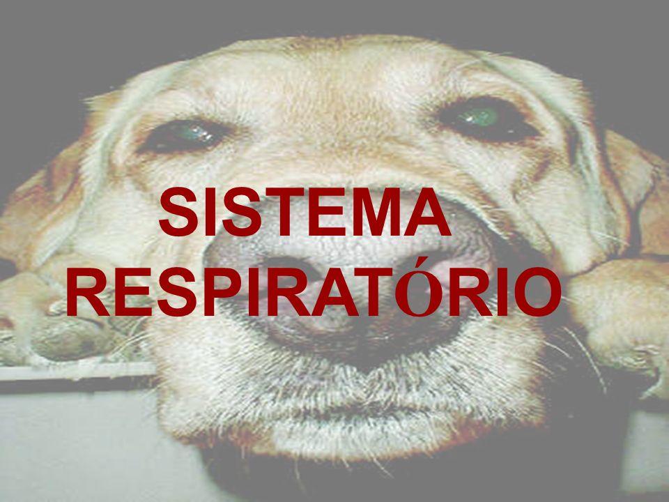 SISTEMA RESPIRAT Ó RIO