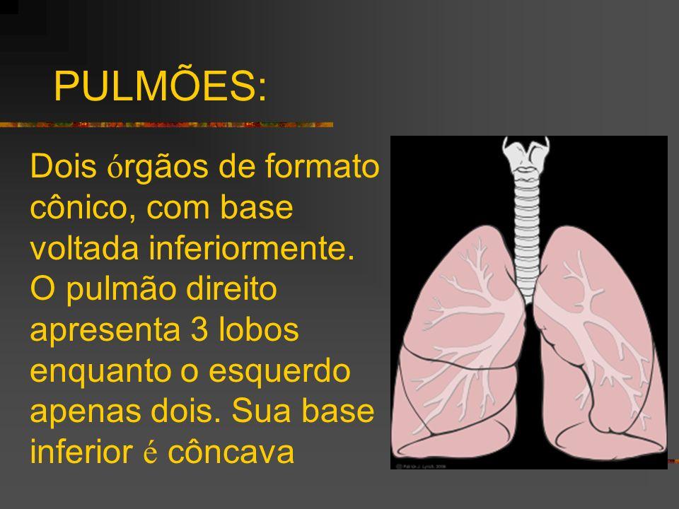 PULMÕES: Dois ó rgãos de formato cônico, com base voltada inferiormente. O pulmão direito apresenta 3 lobos enquanto o esquerdo apenas dois. Sua base
