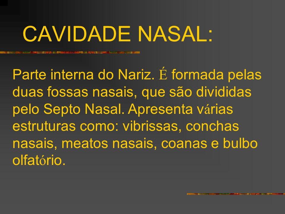 CAVIDADE NASAL: Parte interna do Nariz. É formada pelas duas fossas nasais, que são divididas pelo Septo Nasal. Apresenta v á rias estruturas como: vi