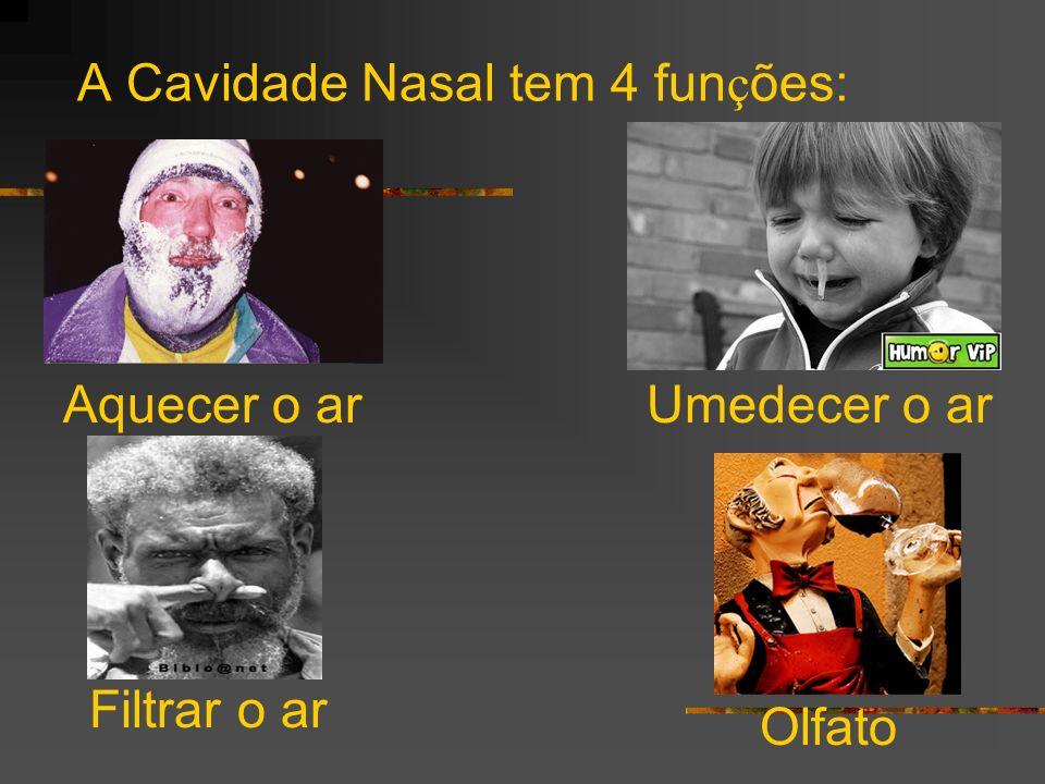 A Cavidade Nasal tem 4 fun ç ões: Aquecer o arUmedecer o ar Filtrar o ar Olfato