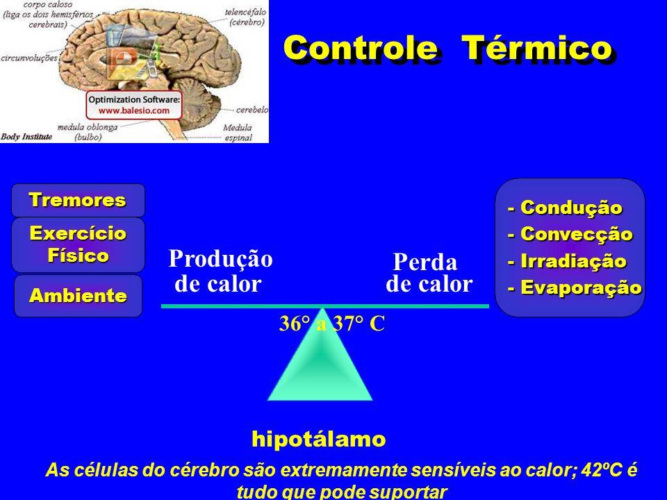 Controle Térmico 36° a 37° C Produção de calor Perda de calor hipotálamo ExercícioFísico Tremores Ambiente - Condução - Convecção - Irradiação - Evapo