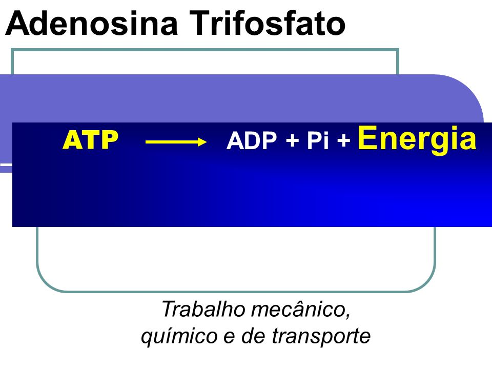 Adenosina Trifosfato ADP + Pi + Energia ATP Trabalho mecânico, químico e de transporte