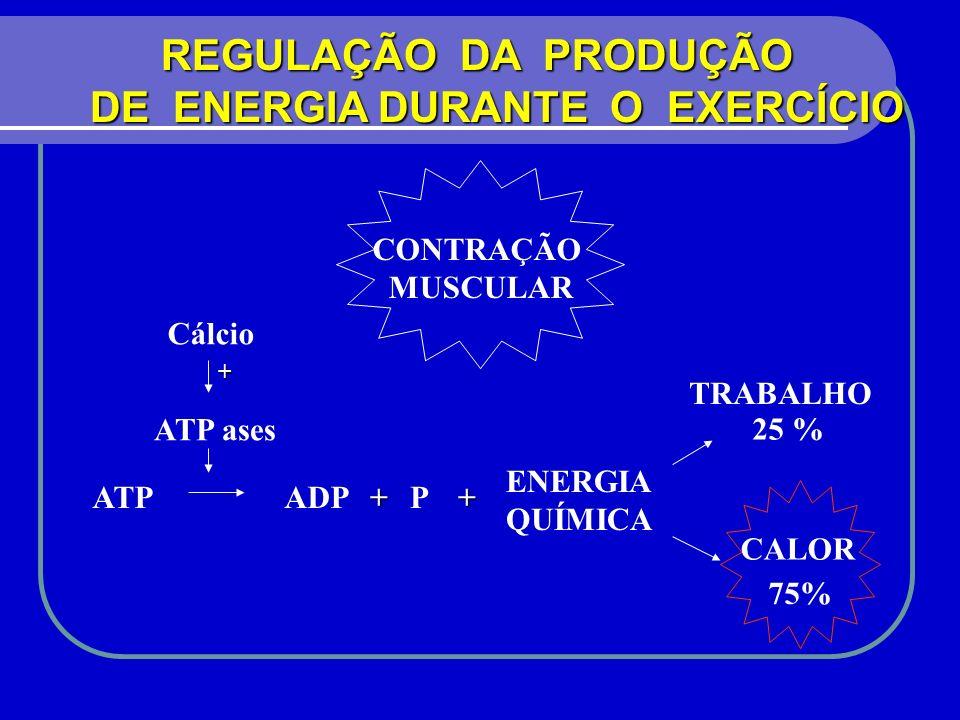 REGULAÇÃO DA PRODUÇÃO REGULAÇÃO DA PRODUÇÃO DE ENERGIA DURANTE O EXERCÍCIO CONTRAÇÃO MUSCULAR TRABALHO 25 % CALOR 75% ENERGIA QUÍMICA ATPADP+P+ ATP as
