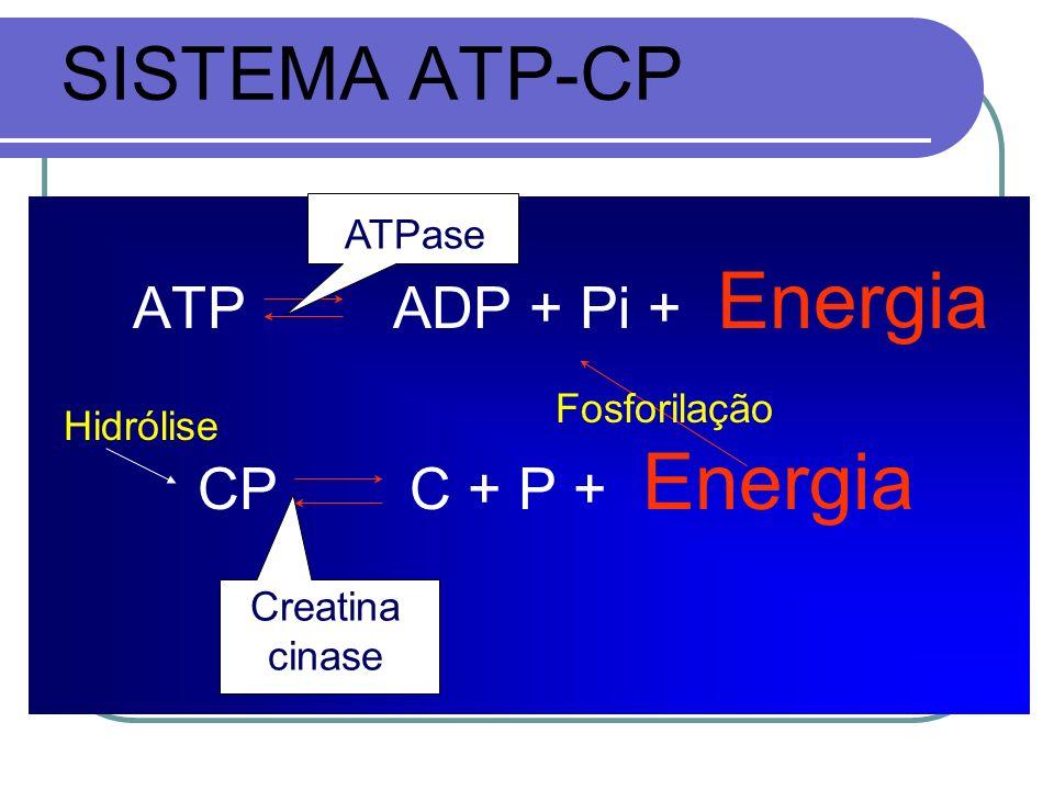 SISTEMA ATP-CP ATP ADP + Pi + Energia CP C + P + Energia Fosforilação ATPase Creatina cinase Hidrólise